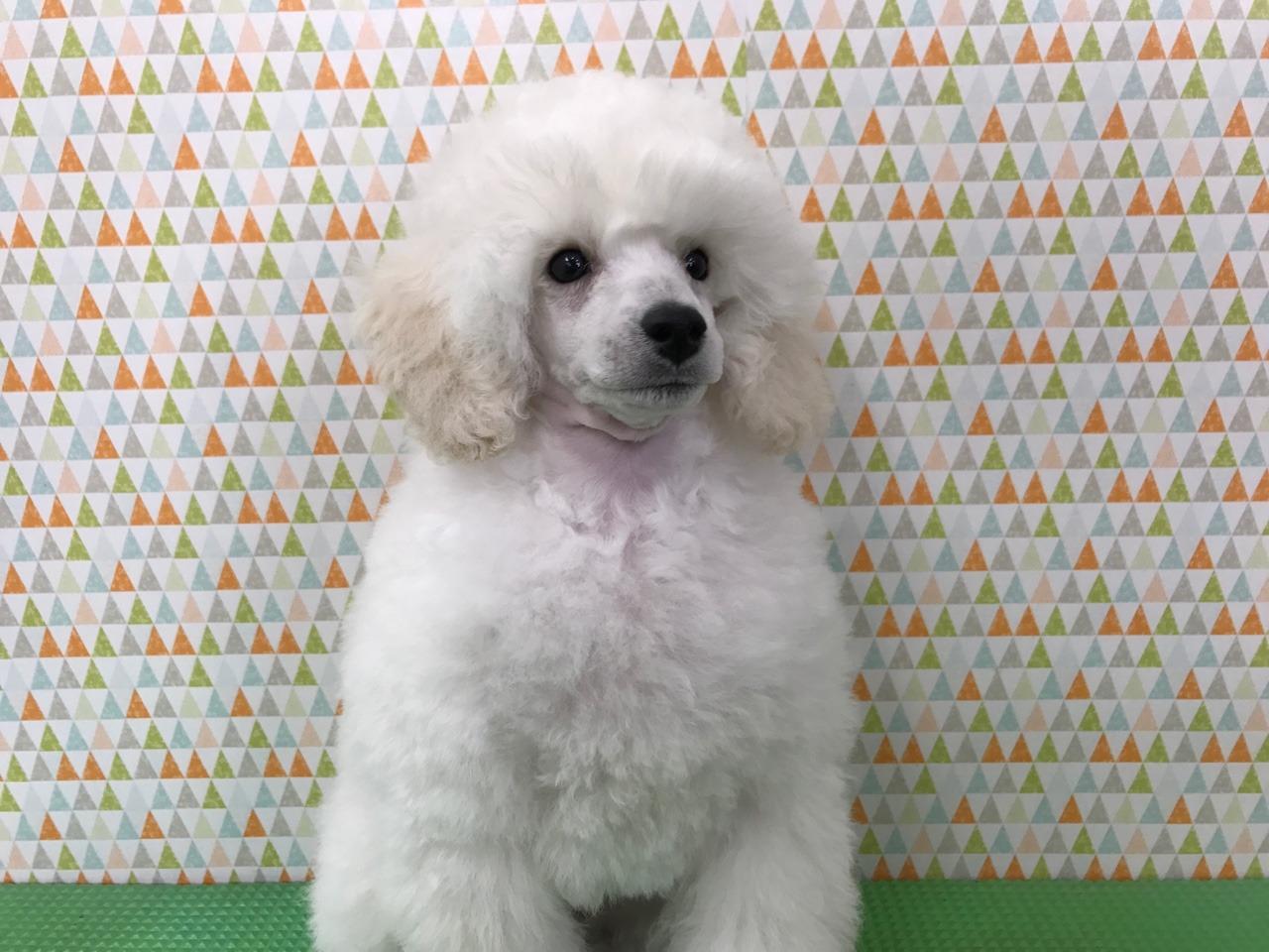 モデル犬として頑張るんだよぉ〜:イメージ